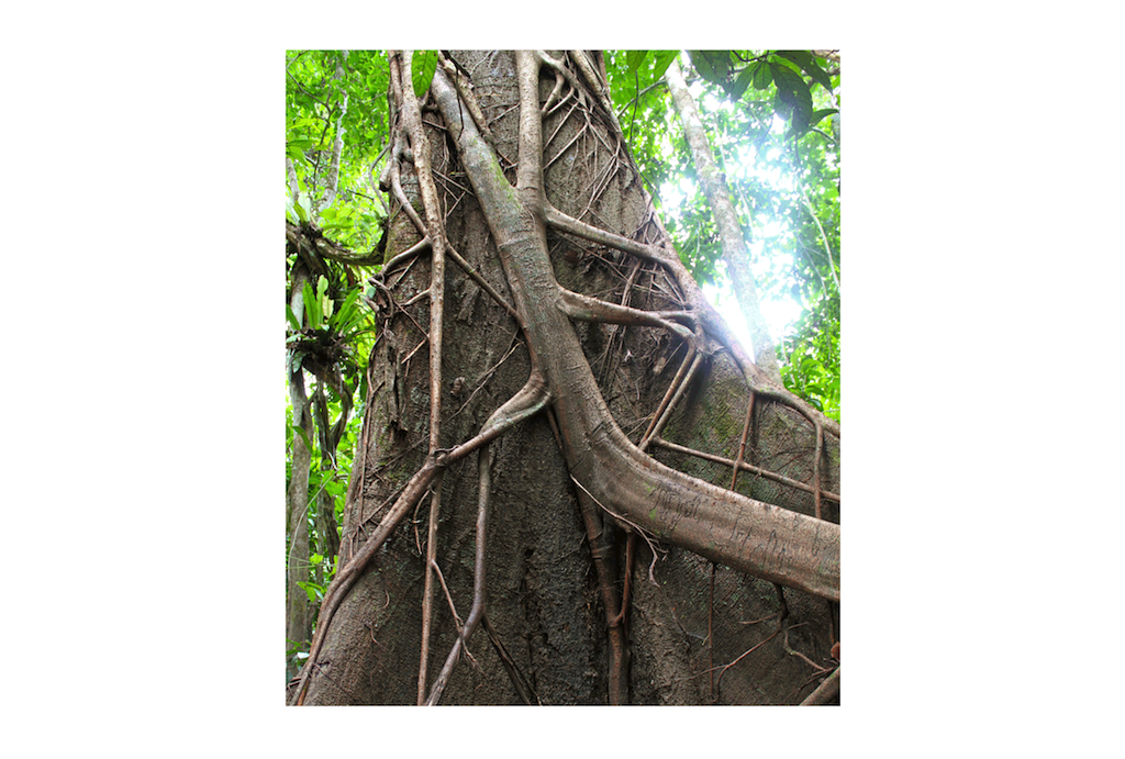 The strangler fig is a metaphor for building a microservices architecture that mimic the functions of a monolith and eventually replace it [Richardson microservices reference architecture]